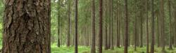 Sustainable forest management in Sweden with the support of satellite imagery